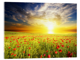 Quadro em acrílico  Field with green grass and red poppies