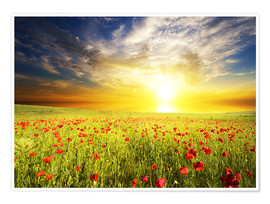Póster Premium  Field with green grass and red poppies