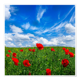 Póster Premium  Red poppies on green field