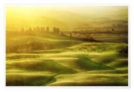 Póster Premium Wavy fields in Tuscany, Italy