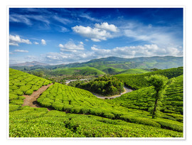 Póster Premium  Green tea plantations in morning