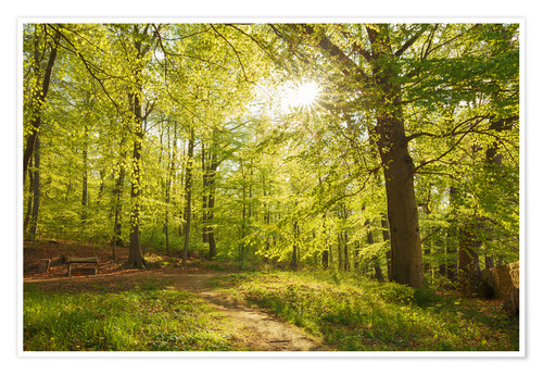 Póster Premium Spring forest with sunshine