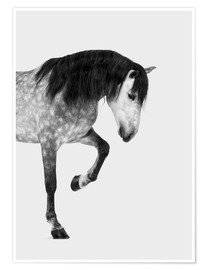Póster Premium From the high horse