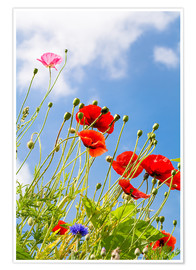 Póster Premium Poppies into the sky