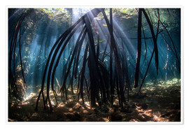 Póster Premium  Beams of sunlight in a mangrove forest - Ethan Daniels
