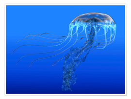 Póster Premium  A blue spotted jellyfish illustration. - Corey Ford