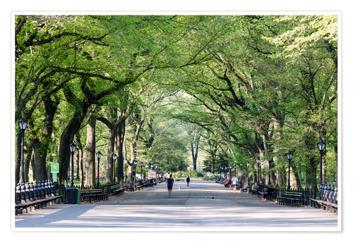 Póster Premium The Mall in spring, Central park, New York city, USA