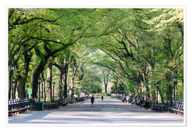 Póster Premium  The Mall in spring, Central park, New York city, USA - Matteo Colombo