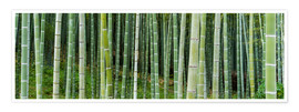 Póster Premium  Green bamboo forest in Kyoto, Japan - Jan Christopher Becke