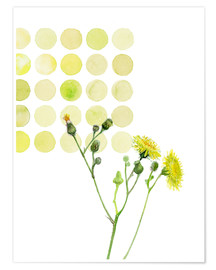 Póster Premium Field Sowthistle in dots