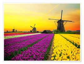 Póster Premium Dutch windmills and fields of tulips