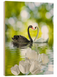 Quadro de madeira  Two swans in love