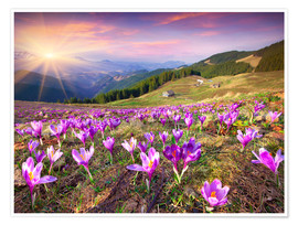 Póster Premium  Crocuses and the sun in spring
