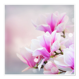 Póster Premium  Magnolia flowers on bokeh background