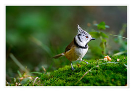 Póster Premium  Cute tit standing on the forest ground - Peter Wey