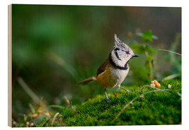 Quadro de madeira  Cute tit standing on the forest ground - Peter Wey