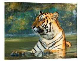 Quadro em acrílico  Tiger lying in the water