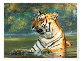 Póster Premium  Tiger lying in the water