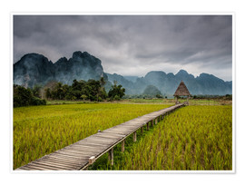 Póster Premium way in paddy field 2