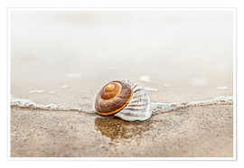 Póster Premium Lonely shell on a beach