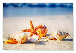 Póster Premium Starfish and sea shells