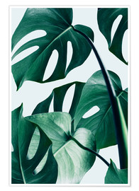 Póster Premium  Monstera - Uma 83 Oranges