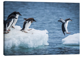 Quadro em tela  Adelie penguins between two ice floes - Nick Dale