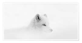 Póster Premium  Arctic fox in a snowstorm - Dominic Marcoux