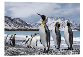 Quadro em acrílico  King penguins on the beach - Deb Garside
