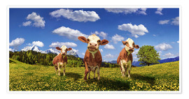 Póster Premium  Cows on the pasture - Michael Rucker