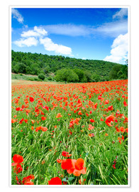 Póster Premium Poppy fields near Covarrubias