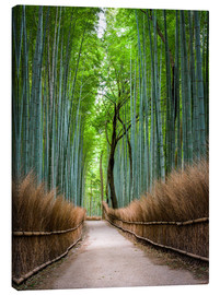 Quadro em tela  Bamboo Forest in Kyoto Sagano Arashiyama, Japan - Jan Christopher Becke