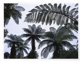 Póster Premium  A roof of tree ferns - Thonig