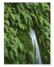 Póster Premium  Ferns at a waterfall - Thonig