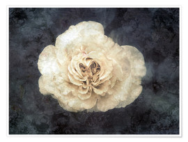 Póster Premium  White rose superimposed with floral texture - Alaya Gadeh