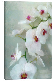 Quadro em tela  Composition of a white orchid with transparent texture - Alaya Gadeh