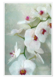 Póster Premium  Composition of a white orchid with transparent texture - Alaya Gadeh