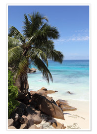 Póster Premium Palm beach in the Seychelles