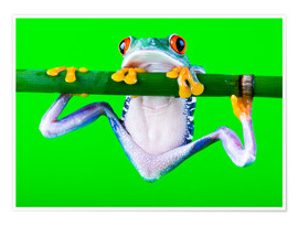 Póster Premium  colorful frog on green