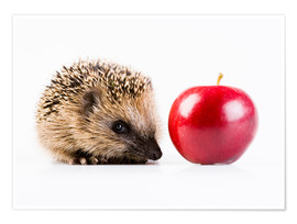 Póster Premium  Hedgehog and apple