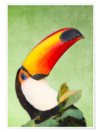 Póster Premium  A colourful toucan bird on a tropical background. - Alex Saberi