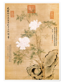 Póster Premium  Peonies and Rock - Chinese School