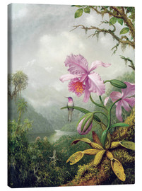 Quadro em tela  Hummingbird Perched on an Orchid Plant - Martin Johnson Heade