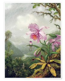 Póster Premium  Hummingbird Perched on an Orchid Plant - Martin Johnson Heade