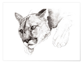 Póster Premium Sketch Of A Captived Mountain Lion