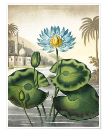 Póster Premium The blue Egyptian water-lily