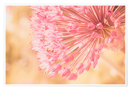 Póster Premium  Creamy Summer - Allium in Pink - INA FineArt