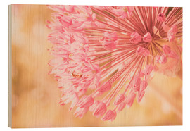 Quadro de madeira  Creamy Summer - Allium in Pink - INA FineArt