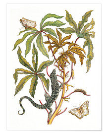 Póster Premium cassava with crocodile and butterfly metamorphosis