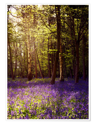 Póster Premium Sunny bluebell wood